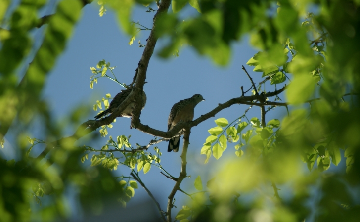 Bird-Watching-01
