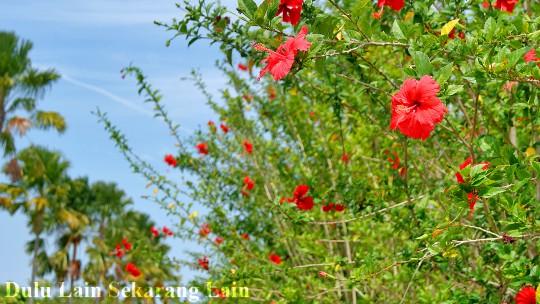 Bunga-Raya-2