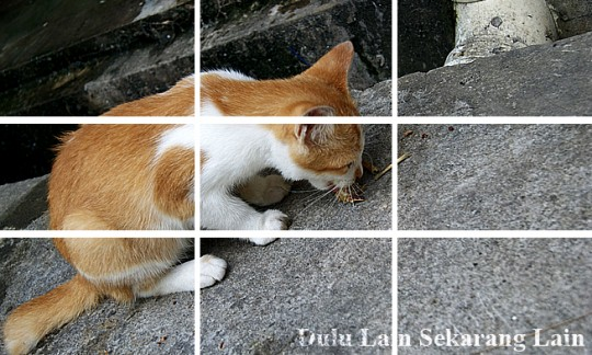 Rule Of Thirds 540x324 Prinsip Asas Fotografi   Rule Of Thirds