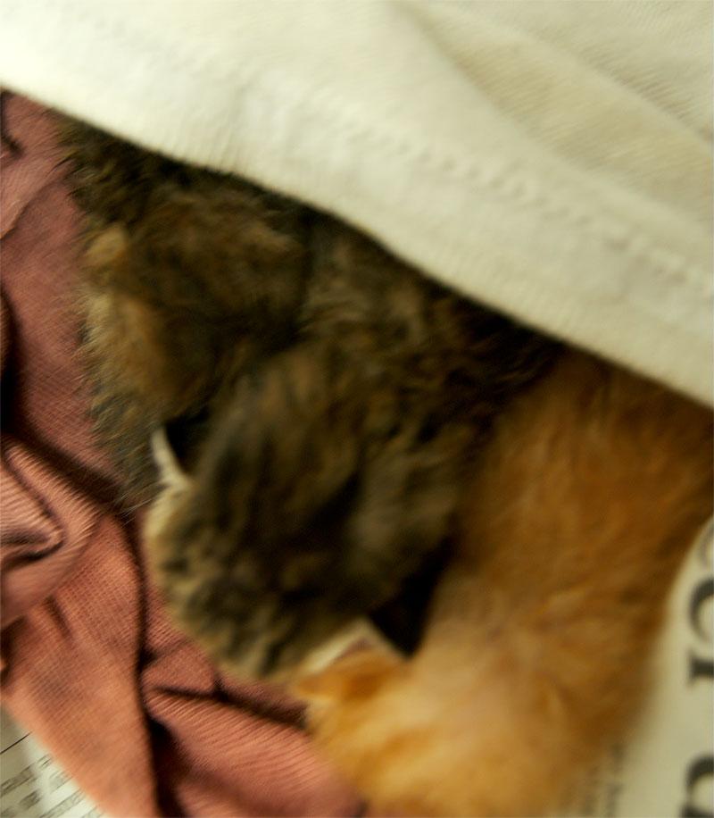 selimut-anak-kucing