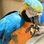 Birds-Safari-Resort