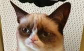 Who Loves Grumpy Cat?