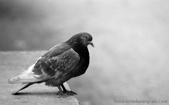 Photography-Bird