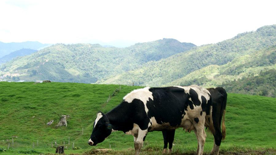 Desa-Dairy-Farm-2