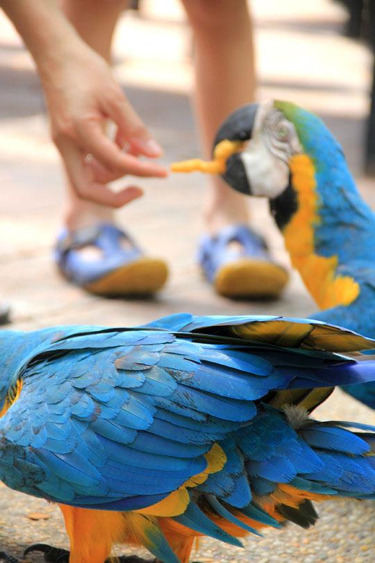 Birds-Safari-Resort-3