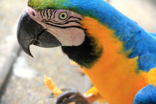 Birds-Safari-Resort-4
