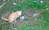 Of Cats and Kittens: Feral, Stray and Pet Cats