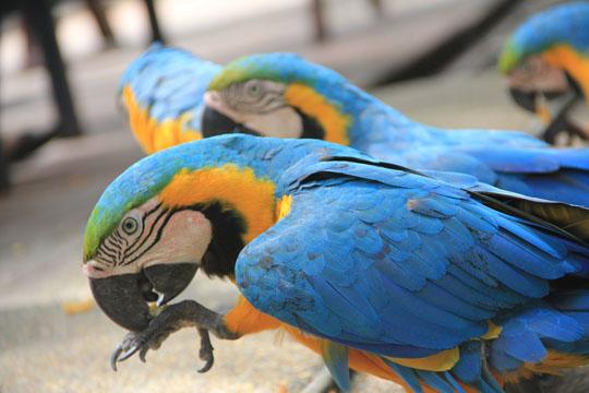 KL Bird Park 2