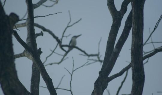 Bird-up-high