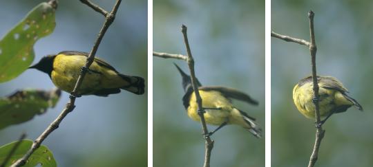 Birds at KK Wetland