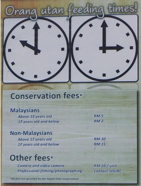 Orang Utan Feeding times