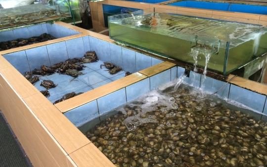 aquarium seafood