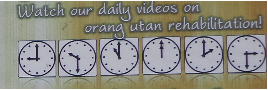 Video time at Sepilok Orangutan Sanctuary