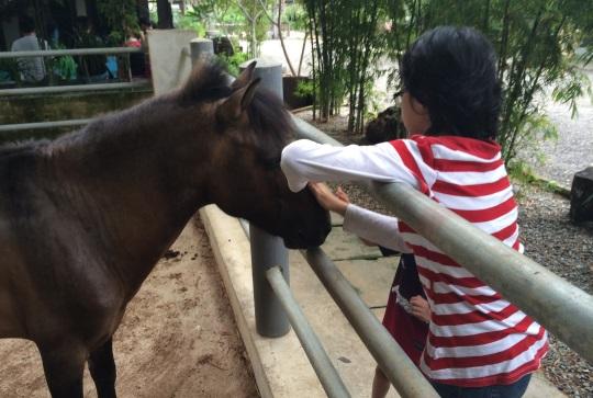 mengusup kuda