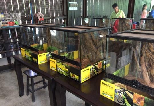 reptilia di mini zoo