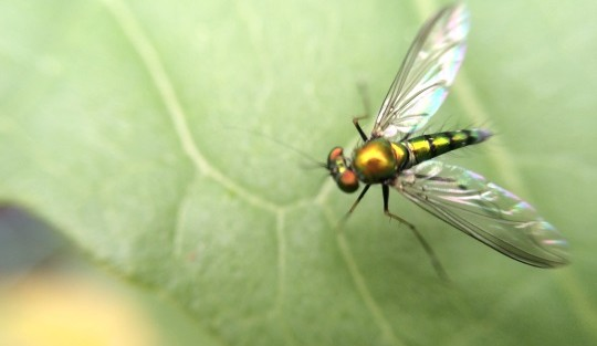 Macro Photography With iPhone