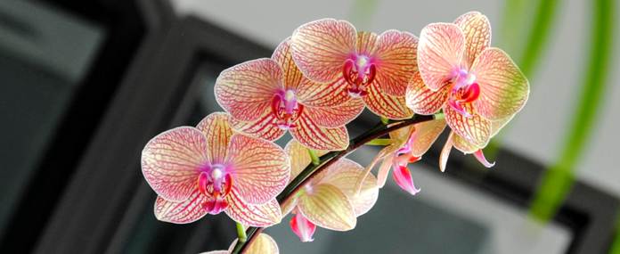 Inside Kuala Lumpur's Rising Floral Destination
