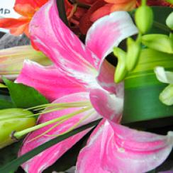 floral KL